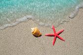 Plaj deniz yıldızı ve beyaz kum üzerinde deniz kabuğu — Stok fotoğraf