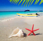 Beach starfish and seashell on white sand — Stock Photo