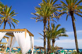 Ibiza Platja En bossa beach with palm trees — Stock Photo