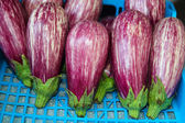 Eggplant vegetables in a row on market — Stock Photo