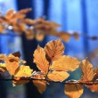 Colors of fall — Stock Photo #7664708