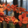 Foto Stock: Colors of fall