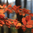 Colors of fall — Stock Photo
