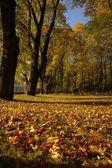Autumn scenery — Stock Photo