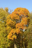 Autumn season — Stock Photo