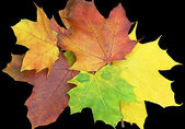 Isolated Colored Leaves — Stock Photo