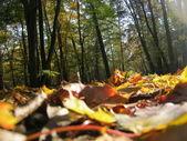 彩色的秋天的叶子在秋季森林地面上 — 图库照片