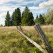 Stock Photo: Wooden fence in wood