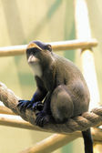Monkey in a zoo — Stock Photo