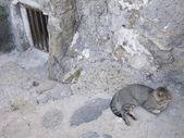 Feral Cat — Стоковое фото