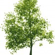 Vector green tree - Stock Vector