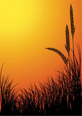 Rye silhouette vector background - sunset — Stock Vector