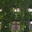 House covered with green leaves — 图库照片