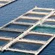 Aquaculture — Stock Photo