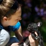 Французский бульдог щенок — Стоковое фото