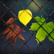 A fallen autumn leaf on a wire fence — Stock Photo