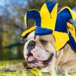Bulldog in a hat — Stock Photo #7546192