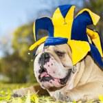 Bulldog in a hat — Stock Photo #7546195