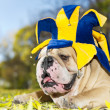 Stock Photo: Bulldog in hat
