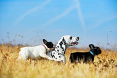 Best dog friends playing — Stock Photo