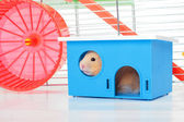 Hamster in home — Stock Photo