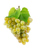 Bunch of fresh grapes and leaves isolated on white — Stock Photo