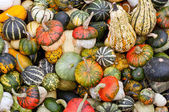 Colorful pumpkins assortment on the market — Stock Photo