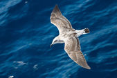 Little seagull 2 — Stock Photo