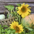Pumpkin and sunflowers — Stock Photo