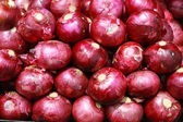 Harvested Red Onions in background — Stock Photo