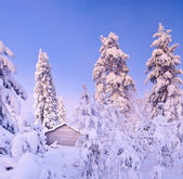 Winter fairy snow forest with pine trees — Stock Photo