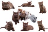 Cat collection isolated on white background — Stock Photo