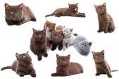 孤立在白色背景上的猫集合 — 图库照片