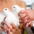 Wedding pigeons — Stock Photo