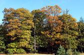 Jesień las — Zdjęcie stockowe