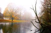 在公园里雾 — 图库照片