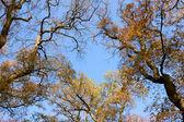 Tree tops over sky — Stock Photo