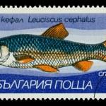 Постер, плакат: BULGARIA CIRCA 1983