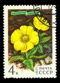 USSR - CIRCA 1977 — Stock Photo