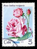 古巴-大约 1979 — 图库照片