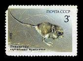USSR-CIRCA 1985 — Stock Photo