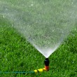 Lawn with Sprinkler — Stock Photo #7584715
