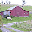 Red barn with cows in pasture — Stock Photo