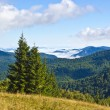 Summer mountains — Stock Photo #7312850