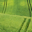 Green field — Stock Photo #7351223