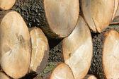 деревянные регистрации — Стоковое фото