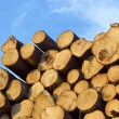 Piled tree trunks — Stock Photo
