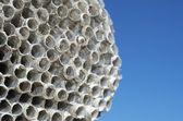 Wasps' nest — Stock fotografie