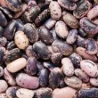 Kidney Beans - Stock Photo