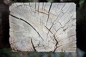 Weathered decaying railway tree — Stock Photo